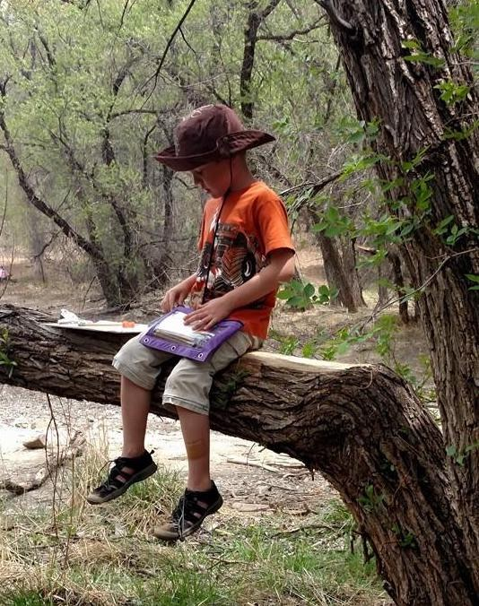 Student in tree collecting data during field work