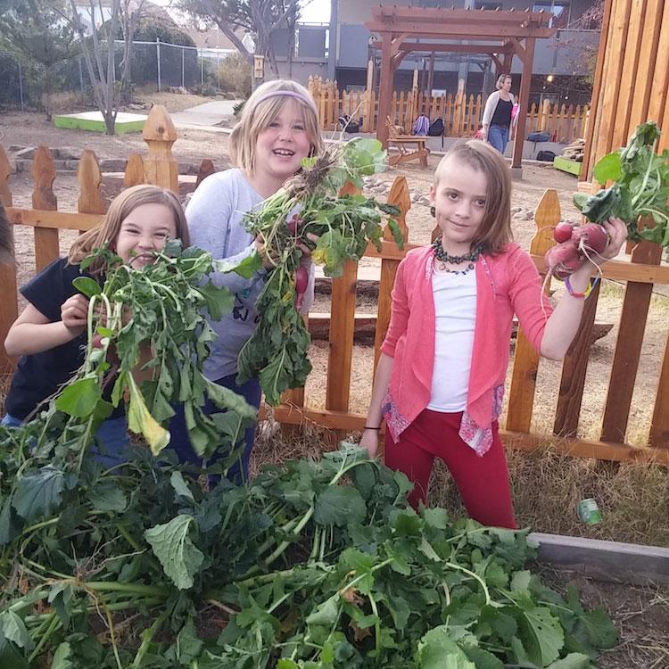 three La Tierra students holding beets in a garden